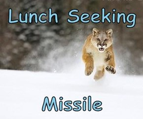 Lunch Seeking   Missile