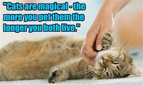 """Cats are magical - the more you pet them the longer you both live."""