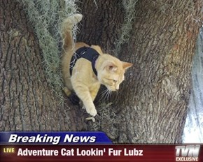 Breaking News - Adventure Cat Lookin' Fur Lubz
