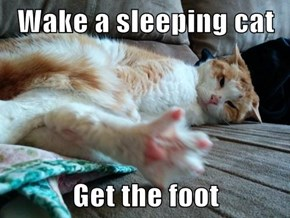 Wake a sleeping cat  Get the foot