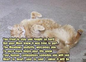 Farewell to Hobbes, CatMadinWestYorkshire's beloved furbaby