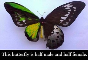 Butterflies Are Weird