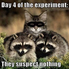 Day 4 of the experiment:   They suspect nothing