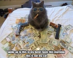 woke up to this in my hotel room this morning this is not my cat
