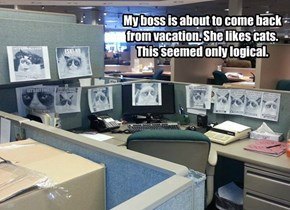 My boss is about to come back from vacation. She likes cats. This seemed only logical.