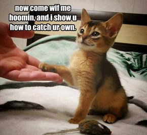 now come wif me hoomin, and i show u how to catch ur own.