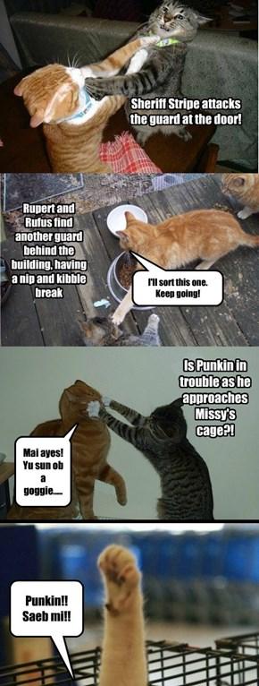 Missy's rescue