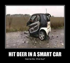 HIT DEER IN A SMART CAR