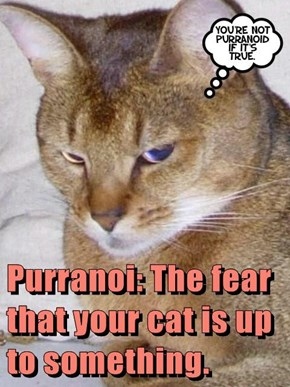 Purranoi: The fear that your cat is up to something.