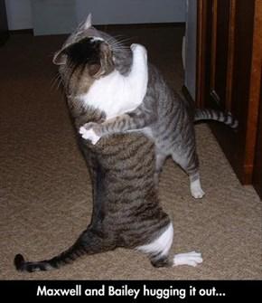 3,2,1...Hug Fight!
