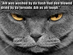 """Aih was washed by da flash flud den blowed dried by da tornado. Aih as ah tough."""