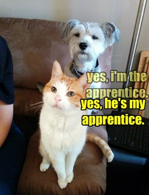 yes, he's my apprentice.