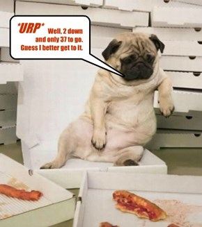 Weekends are hell for the single pug...