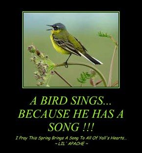 A BIRD SINGS... BECAUSE HE HAS A SONG !!!