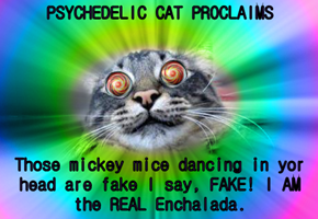 PSYCHEDELIC CAT PROCLAIMS  Those mickey mice dancing in yor head are fake I say, FAKE! I AM the REAL Enchalada.