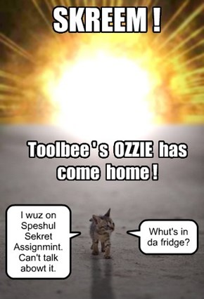 Toolbee's Ozzie is HOME!