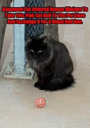 Basement Cat Ordered Human Minions To Take This Pink Cat Ball To The Pet Store And Exchange It For A Blood Red One.