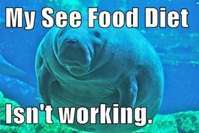 My See Food Diet  Isn't working.