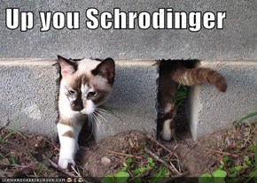Up you Schrodinger