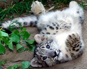 Can I Has a Belly Scratch