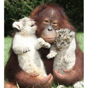 Three Cuddly Friends