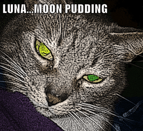 LUNA...MOON PUDDING