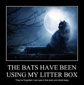 THE BATS HAVE BEEN USING MY LITTER BOX