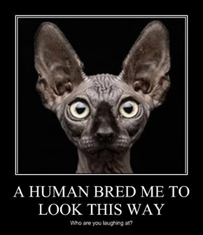 A HUMAN BRED ME TO LOOK THIS WAY