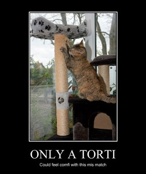 ONLY A TORTI