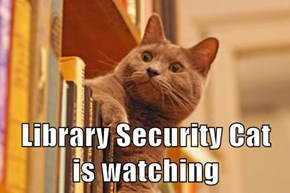 Library Security Cat                         is watching
