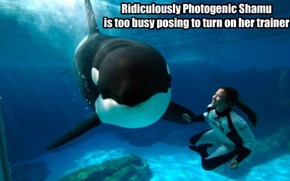 Ridiculously Photogenic Shamu is too busy posing to turn on her trainer