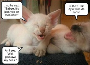 Kitteh Girl's Night Humor