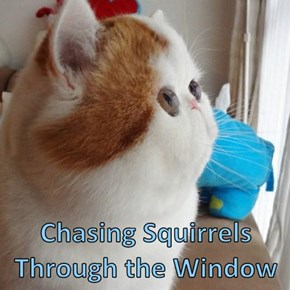 Chasing Squirrels Through the Window