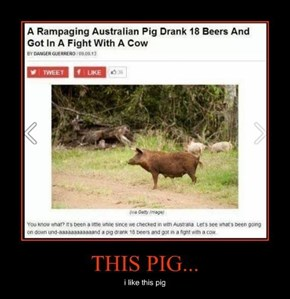 Best Pig Ever