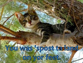 You was 'spost ta land on yor feet.