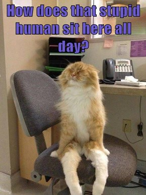 How does that stupid human sit here all day?