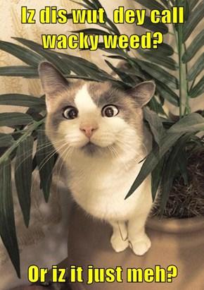 Iz dis wut  dey call wacky weed?  Or iz it just meh?