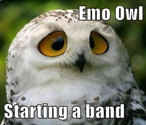 Emo Owl  Starting a band