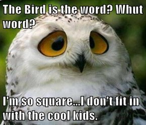 The Bird is the word? Whut word?  I'm so square...I don't fit in with the cool kids.
