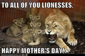 TO ALL OF YOU LIONESSES,  HAPPY MOTHER'S DAY!