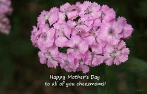 Happy Mother's Day to all of you cheezmoms!