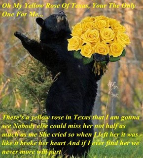 Oh My Yellow Rose Of Texas, Your The Only One For Me...  There's a yellow rose in Texas that I am gonna see Nobody else could miss her not half as much as me She cried so when I left her it was like it broke her heart And if I ever find her we never more
