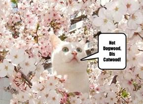 Not Dogwood, Catwood!