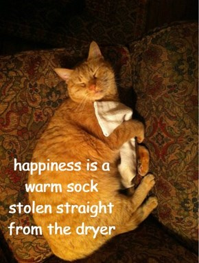 happiness is a warm sock stolen straight from the dryer