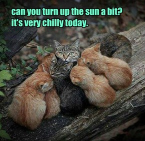 can you turn up the sun a bit? it's very chilly today.