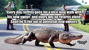 Every day, Jeffrey goes for a nice long walk with  his new owner, and every day he returns alone.  Soon he'll run out of potential new owners.