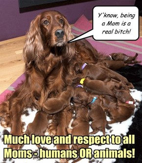 Much love and respect to all Moms - humans OR animals!