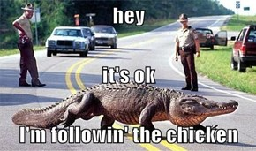 hey it's ok I'm followin' the chicken