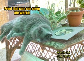 Proof that cats can sleep  ANYWHERE!