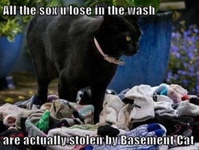 All the sox u lose in the wash  are actually stolen by Basement Cat